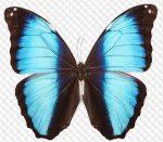 Фон прозрачный бабочки – Картинки на прозрачном фоне и png для фотошопа