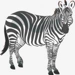 Зебра графика – Zebra Векторы, фото и PSD файлы