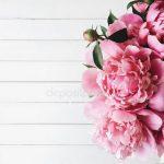 Пионы цветы фон – картинки и фото пионы, скачать рисунки на Depositphotos®