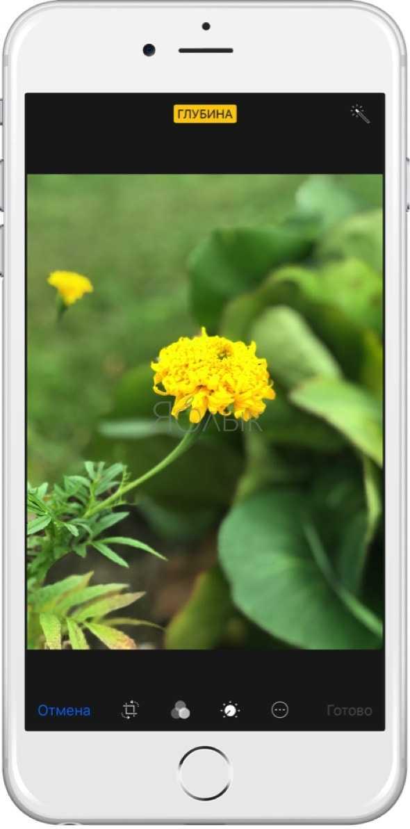 Как айфон снимает фото где картинка двигается вам подошло